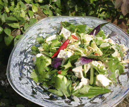 絹豆腐と水菜のサラダ 寒ずり胡麻ドレッシング